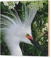 Snowy Egret With Breeding Plumage Wood Print