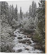 Snowy Foliage Along Stream In Autumn Wood Print