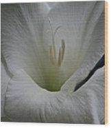 Snowy Gladiolus Wood Print