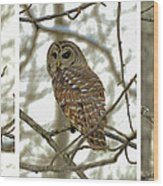Snowy Morning Owl Triptic - 10dec563a Wood Print