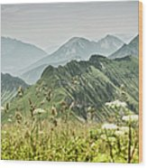 Snowy Mountains And Grassy Fields Wood Print