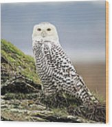 Snowy Owl At Boundary Bay Vancouver Wood Print