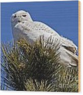 Snowy Owl High Perch Wood Print