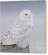 Snowy Owl I Wood Print