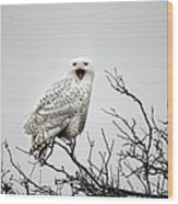 Snowy Owl In A Tree Wood Print