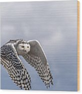 Snowy Owl In Flight Wood Print