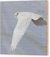 Snowy Owl In Flight In Saskatchewan Canada Wood Print