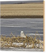 Snowy Owl Perched Frozenpond Wood Print