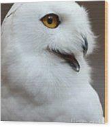 Snowy Owl Portrait Wood Print