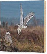 Snowy Owls Wood Print