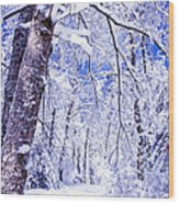 Snowy Path Wood Print by Rob Travis