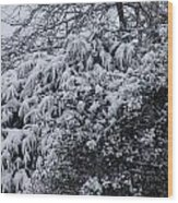 Snowy Winter Branches Wood Print