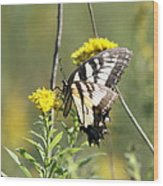 So Fragile - Butterfly Wood Print