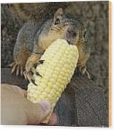 So Much Sweet Corn So Little Time Wood Print