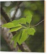 Soaring Leaves Wood Print