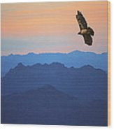 Soaring Red Tailed Hawk At Sunset Wood Print