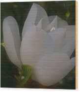 Soft Bloom Wood Print