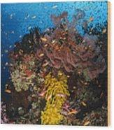 Soft Coral And Sea Fan, Fiji Wood Print