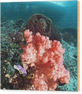 Soft Coral And Sea Squirts Wood Print