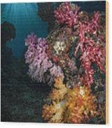 Soft Coral And Sunburst In Raja Ampat Wood Print