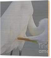 Soft Egret Glow Wood Print