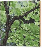 Soft Green Leaves Wood Print