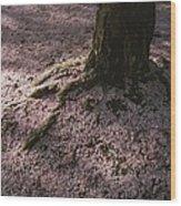 Soft Light On A Pink Carpet Of Fallen Wood Print