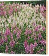 Soft Meadow  Wood Print