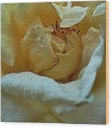 Soft Melody Wood Print