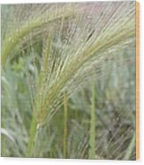 Soft Rain On Grass Wood Print