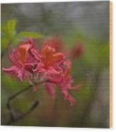 Soft Red Rhodies Wood Print