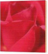 Soft Red Rose Wood Print