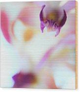 Soft Seduction. Orchids Wood Print