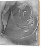 Soft White Rose Wood Print
