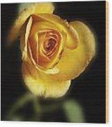 Soft Yellow Rose On Black Wood Print