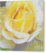 Softly Blooming Rose Wood Print