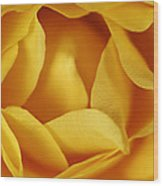 Softness In Yellows Wood Print