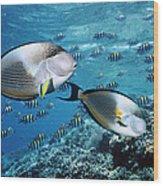 Sohal Surgeonfish Wood Print