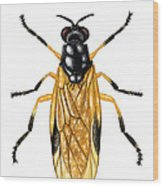 Soldier Fly Wood Print