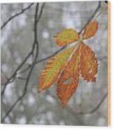 Solitary Leaf Wood Print