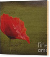 Solitary Poppy. Wood Print