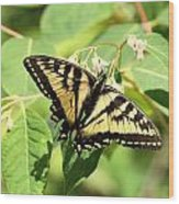 Solitary Swallowtail Wood Print