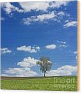 Solitary Tree In Green Meadow Wood Print by Bernard Jaubert