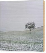 Solitary Tree In Winter Wood Print by Bernard Jaubert