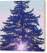 Solitary Trees Poster Wood Print