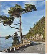 Somes Sound Maine Wood Print