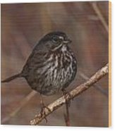 Song Sparrow Wood Print