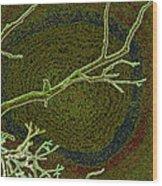 Songbird Green Wood Print