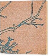 Songbird Peach Wood Print