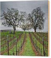 Sonoma County Vineyard Wood Print